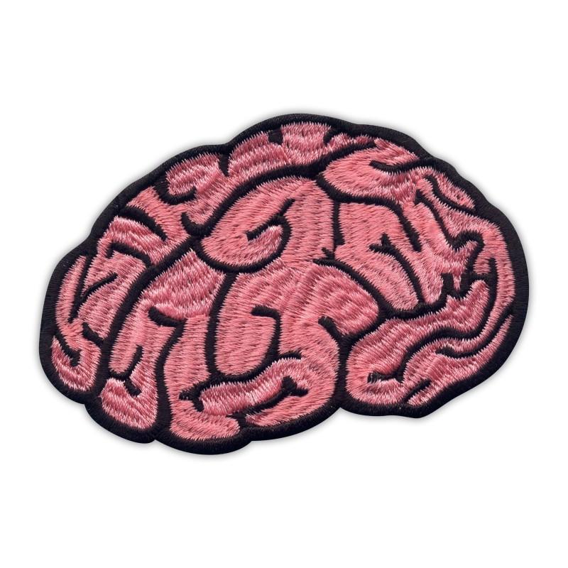 BRAIN - the cortex of the brain